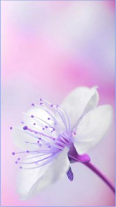 Flowers Wallpaper For android